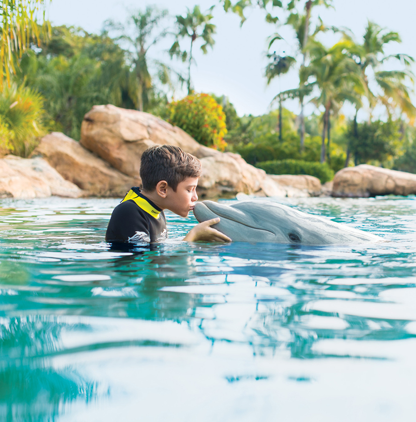 Discovery Cove Package Your Day In Paradise. Limited Time - 3rd Night Free