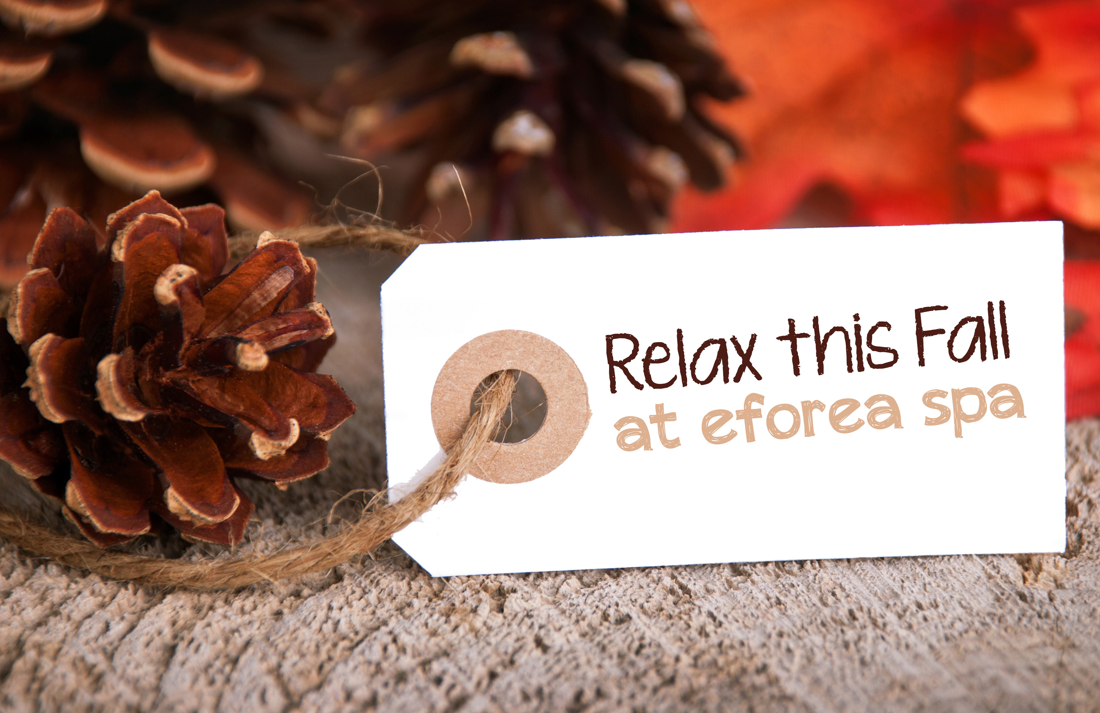 Duplicate of Fall Specials at Eforea Spa